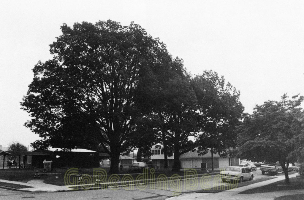 The oak tree on the left was struck by lightening July 14, 1996